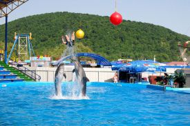 delfinarij-arhipo-osipovka-04