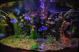 image-wallpaper-1440-900-Russia-Gelendzhik-Oceanarium-Sea-Aquarium-Russian-Ni770196